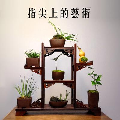 绿植盆景小品苔藓微景观办公室盆栽 火山石菖蒲 文竹 茶室摆件
