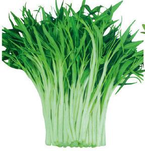 蔬菜种子 柳叶白杆空心菜种子大叶通心菜 柳叶空心菜水上竹叶菜图片