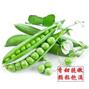 甜脆豌豆種籽散裝四季豌豆青豆蠶豆尖荷蘭豆種子菜籽秋冬蔬菜種孑
