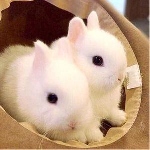 物兔活活体兔物兔活活体兔兔物宠物兔活