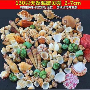2-3cm白色小贝壳打孔 手工贝壳diy相框制作儿童幼儿园手工课材料