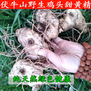 新鮮甜黃精野生雞頭根老虎姜現賣現挖雞爪參塊莖可做種苗5斤包郵