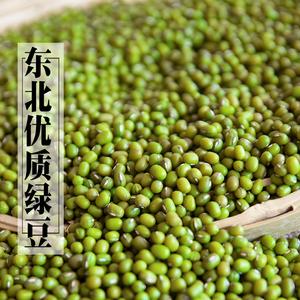 东北小绿豆500g 黑龙江五谷杂粮生豆芽 笨品种绿豆芽邹有才养生