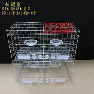 肉鸽 笼子 鸽子图片