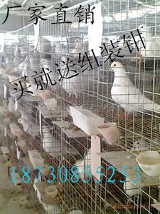 肉鸽 笼子 鸽笼图片