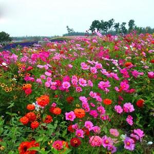 花种子_北方花籽种子庭院