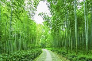 绿色竹林海报竹子房间风水贴画护眼挂画大自然风景装饰墙贴画kt板