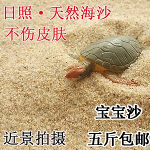 乌龟冬眠细沙