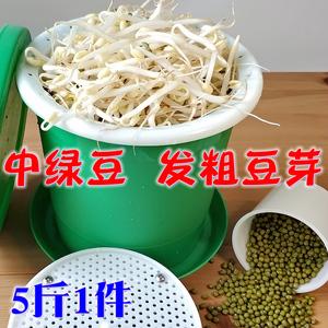 新货中粒发豆芽绿豆5斤 生绿豆芽豆专用大明绿豆东北农?#26131;?#31181;绿豆