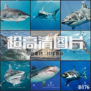 超大超高清图片鲨鱼海洋生物大自然野生鱼类动物美工合成设计素材