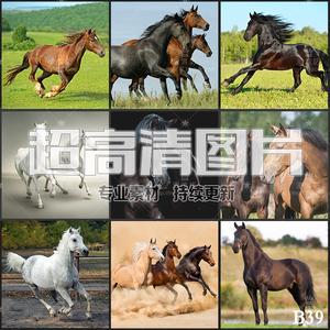超大超高清图片奔驰的骏马宝马战马野马马匹动物美工设计合成素材