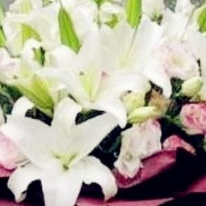 上海天津龙口香水百合花束北京同城鲜花速递朋友同事领导长辈礼物
