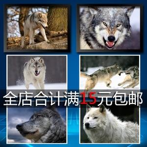 凶狠的狼1 动物世界 海报 装饰画 墙画 贴画 挂画?#30340;?#30456;框 照片纸