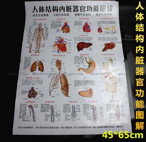 医院诊所挂图人体结构内脏器官功能图解挂图心肝脾肺肾脏胃肠血管