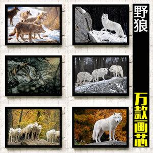 野狼饿狼海报 野生动物挂画贴画壁画壁纸猛兽墙纸画报图片装饰画