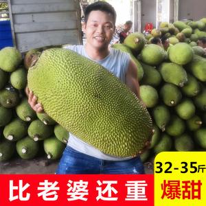 32-35斤現摘干苞黃肉菠蘿蜜新鮮水果包郵海南假榴蓮非紅心肉40