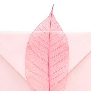 法國G.LALO創意復古彩色小信封葉脈信封賀卡情書信封文藝浪漫信封