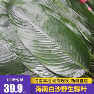 包邮海南白沙粽叶包粽子的叶子大号粽子叶 新鲜天然野生柊叶种叶
