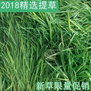 5斤包邮!2018年新草250g 提摩西草 提木西甘肃草龙猫兔子豚鼠粮草