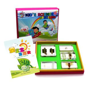 儿童科学实验动物标本设备 幼儿教学标本系列 蚕宝宝成长记标本