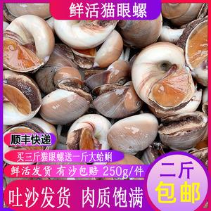 海鲜水产鲜活猫眼螺包邮新鲜沙螺野生大沙螺香螺扁玉螺贝类250g