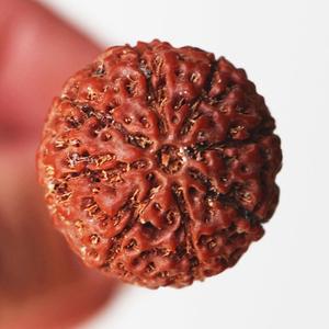 尼泊尔六七八瓣金刚菩提子原籽手串散籽满肉男士8瓣十瓣金钢菩提