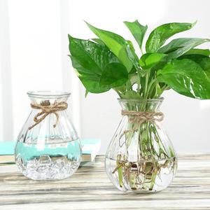 创意小花瓶绿萝