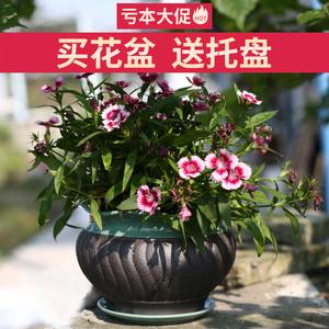 创意多肉盆绿萝盆景韵味大号托盘芦荟紫砂花盆陶瓷盆室内家用批发