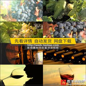 J030種植葡萄園葡萄酒廠加工釀造酒窖酒莊喝酒品酒實拍視頻素材
