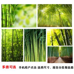竹林海报 竹子 竹林 树木 海报定做 自然山水风景 挂画装饰贴墙画