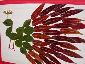 天然树叶画 树叶贴画树叶标本标本贴画孔雀树叶画 幼儿园贴画素材图片