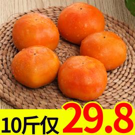 脆柿10斤硬柿子甜柿子时令当季脆甜新鲜水果批发包邮5脆柿子