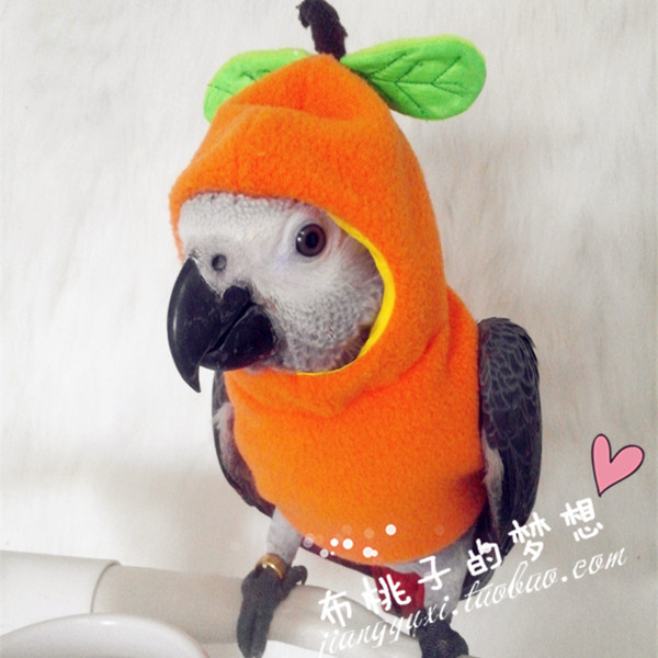 Butaozi dream custom hooded Parrot bird clothes clothing spring and Autumn Sweater