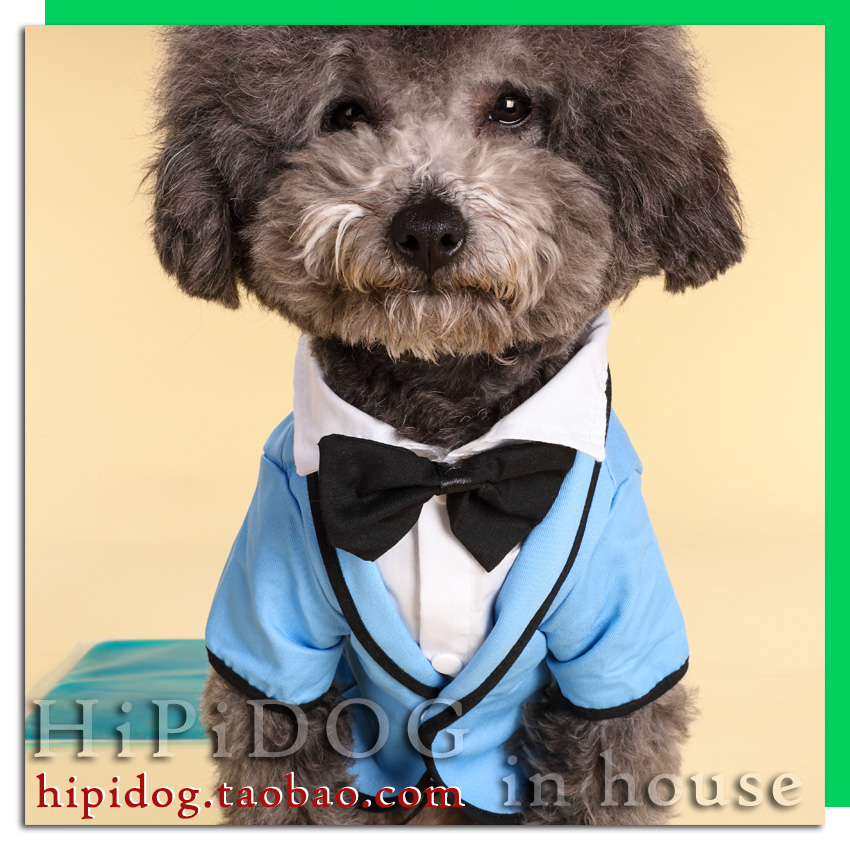 Romantic groom dresses little dog clothes Tactic feet poodle cat bear spring pet clothing