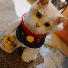 Japan petio Lucky cat pet cat clothes turned British short costume into cat cat standing.