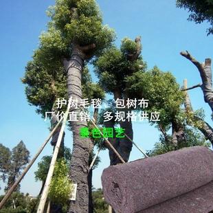 大树保湿保温裹树包树带水果包装材料布护树布毛毯防虫苗木绷带