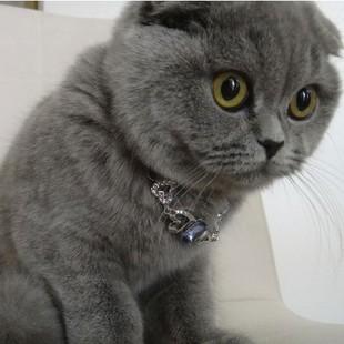 汤姆连锁★家养 英短 蓝猫英国短毛猫 蓝色蓝灰色 大圆脸黄金眼