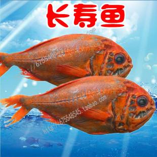 新西兰长寿鱼 2~2.5/条冷冻野生深海橙鲷鱼红鱼20斤   阿里巴巴