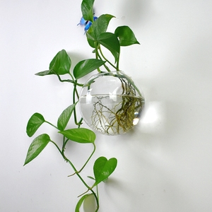 创意壁挂水培花瓶?#36824;?#31481;绿萝玻璃花盆悬挂式透明小鱼缸墙面装饰品