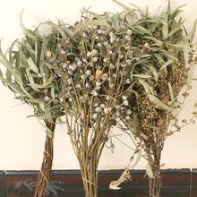 Эвкалипт маленькие фрукты метр фрукты рождество день цветов однако действительно цветок сухой филиал ретро литература и искусство ветер декоративный мягкий наряд качели установить сухие цветы