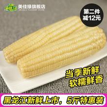 【 прекрасный хорошо зеленый 】 клейкий рис кукуруза к северо-востоку свежий тендер липкий кукуруза сладкий палка белый нефрит метр палка вакуум нет добавить в подготовка