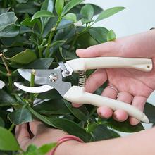Домой домой нержавеющей стали филиал ремонт палочки ножницы выбирать фрукты цветы ножницы сад лес плодовое дерево кальмар ножницы сад искусство инструмент