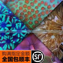 Искусственный производство коралловый мягкий тело коралловый SPS коралловый генерал не- физическая фото доставка сверхвысокое соотношение цены и качества