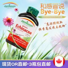 Сейчас в надичии канада сильный и красивый сырье Echinacea фиолетовый шило хризантема 120 зерна