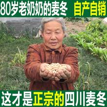 Старый бабушка специальная марка нет сера пшеница зима 500 грамм бесплатная доставка провинция сычуань хлопок солнце дикий может быть оснащен песок женьшень нефрит бамбук желтый стилбен чай