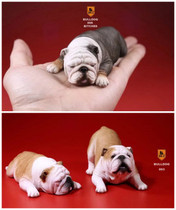 Mr.Z Mr Zhu British Bulldog model English bucket car ornaments naughty Han Meng couple male and female