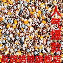 Война голубь голубь зерна A уровень питание зерна группа кукуруза голубь зерна письмо голубь подача материал 50 кг загрузить доставка до шанхая, провинций чжэцзян, цзянсу и аньхой включена в стоимость