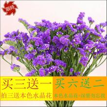Дежурные незабудка в небе звезда юньнань природный подарок действительно цветок цветочная композиция место декоративный сухие цветы букет