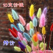 Кролик хвост трава природный сухие цветы действительно цветок вечная жизнь букет стекло декоративный сельская местность комнатный гостиная качели установить цветочная композиция