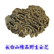 К северо-востоку специальный свойство дикий облако древесный гриб желтый облако древесный гриб белоснежный гора дикий облако древесный гриб гриб дикий облако древесный гриб бактерии дух древесный гриб 250 грамм